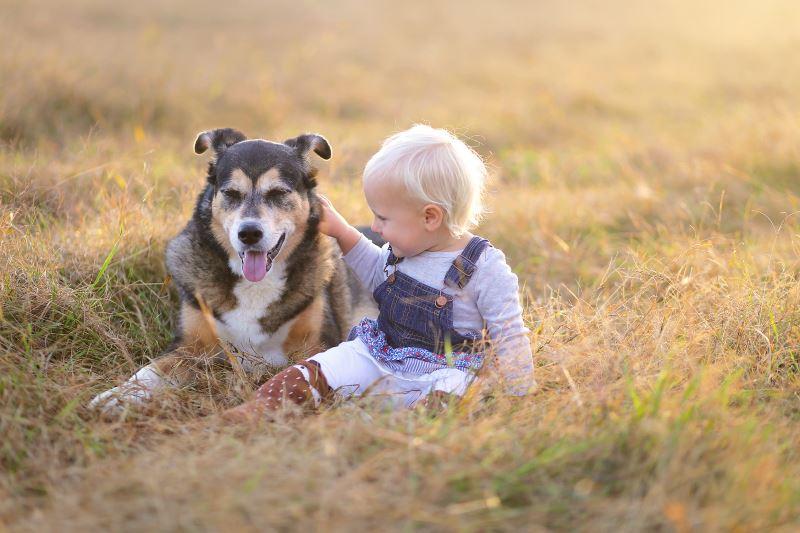 Haustiere für Kids – Diese tierischen Freunde passen am besten