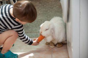 Kind füttert Hase