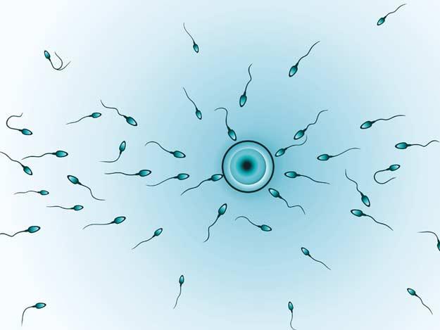 Schwangerschaftstest