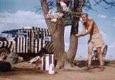Gewinne fesselnde Tierszenen aus der Savanne Ostafrikas – Grzimek auf Blu-ray