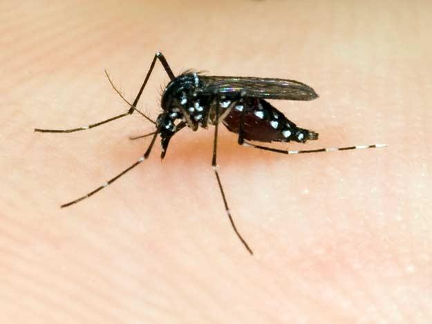 Mücken | kinder.de